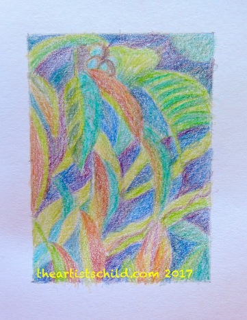 Walnut Tree, Colour Pencil Sketch