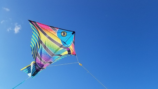 kite-2160948_960_720