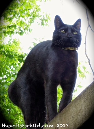 A neighbour's black cat