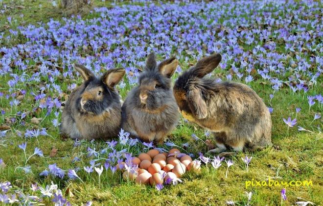 rabbit-3259861_960_720